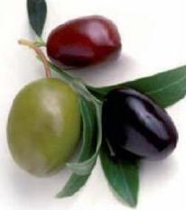 Оливки из Испании – основа средиземноморской диеты